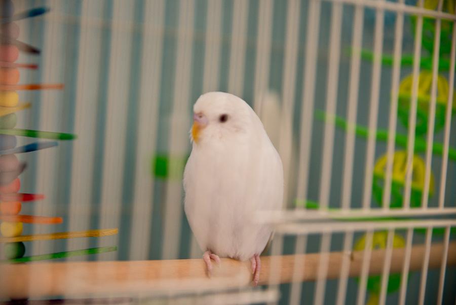 Gone away is the bluebird…